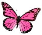 single butterfly